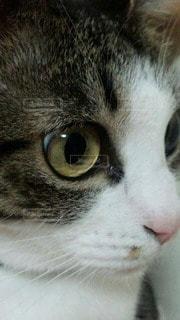 猫の写真・画像素材[96409]