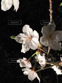自然の写真・画像素材[96422]