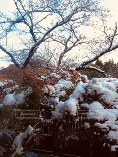 初雪の写真・画像素材[2754952]