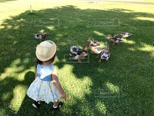 草原に立っている少女の写真・画像素材[3686269]