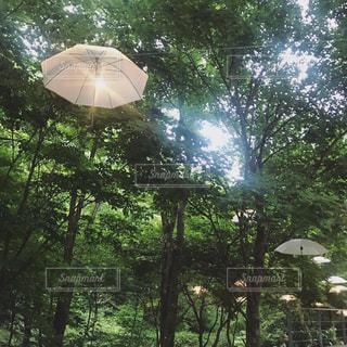 木の上の傘のクローズアップの写真・画像素材[2510286]