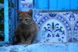 青の街 シャウエンの子猫の写真・画像素材[2970729]