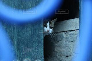 青の街 シャウエンの猫の写真・画像素材[2970725]