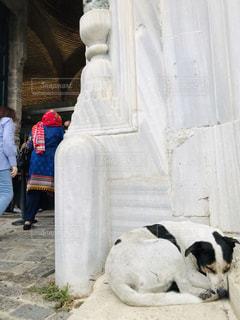 建物の前に立っている犬の写真・画像素材[2512055]
