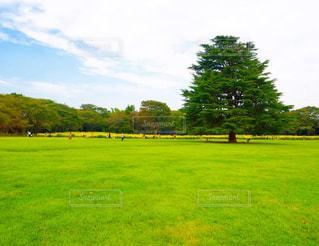 草原の中の一本の樹木の写真・画像素材[2512430]