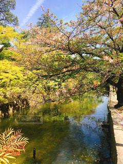 木々に囲まれた水域の写真・画像素材[2512616]