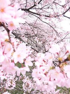 花をクローズアップするの写真・画像素材[2700578]