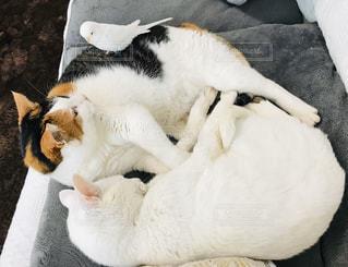 猫2匹に小鳥が1羽の写真・画像素材[3009542]