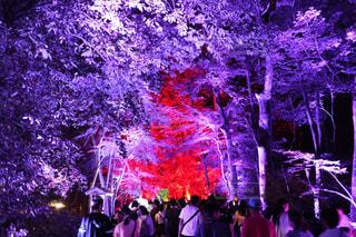 下鴨神社ライトアップの写真・画像素材[2514500]