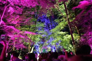 下鴨神社ライトアップの写真・画像素材[2514507]