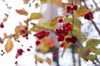 花のクローズアップの写真・画像素材[2553237]