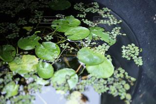 池のクローズアップの写真・画像素材[2556924]