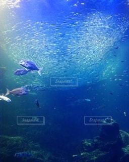 水族館の写真・画像素材[2646847]