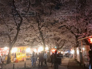 夜桜の写真・画像素材[2651980]