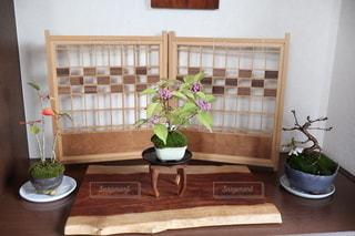 ミニ盆栽の写真・画像素材[2658678]