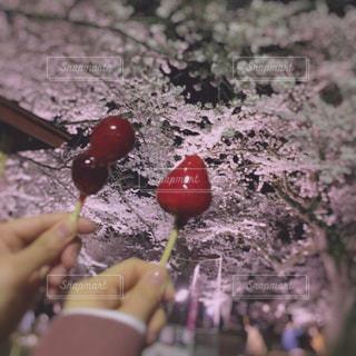 花よりフルーツ飴🌸🍬の写真・画像素材[2563776]