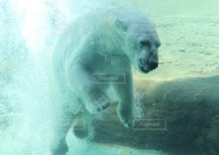 ホッキョクグマが水中を泳いでいるの写真・画像素材[2515137]