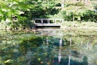 モネの池の写真・画像素材[2515216]