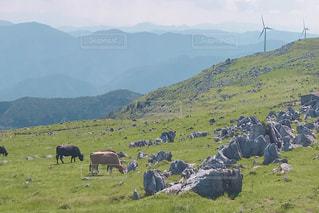 草原と牛と空photoの写真・画像素材[2620503]