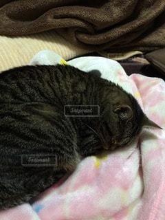 猫の写真・画像素材[96707]