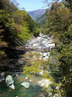 森を流れる川と吊り橋の写真・画像素材[2534321]