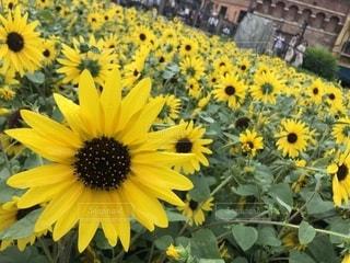 黄色い花の写真・画像素材[2537713]