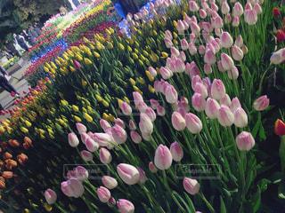 カラフルな花の群しの写真・画像素材[2556675]