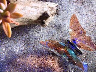 キラキラな蝶々の写真・画像素材[2556813]