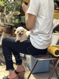 足の上で犬が休んでいるの写真・画像素材[2534978]