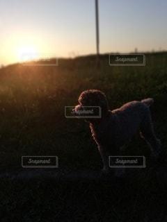 草に覆われた野原の上に立っている犬の写真・画像素材[2525848]