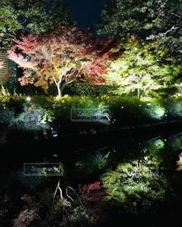 森の眺めの写真・画像素材[2517076]