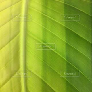 緑のグラデーションの写真・画像素材[1188456]
