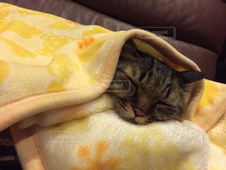 毛布に包まって眠っている猫の写真・画像素材[2546438]