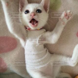 保護猫の写真・画像素材[2528365]