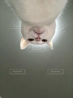 猫神様の写真・画像素材[2529080]