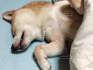 犬の写真・画像素材[97083]