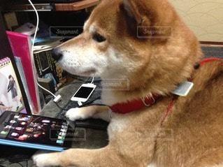 犬の写真・画像素材[97086]