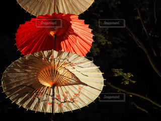 大きな赤い傘の写真・画像素材[2519033]