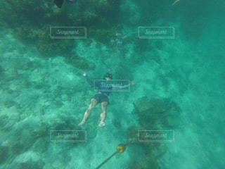 海の中の写真・画像素材[2547275]