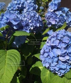 花の写真・画像素材[14680]