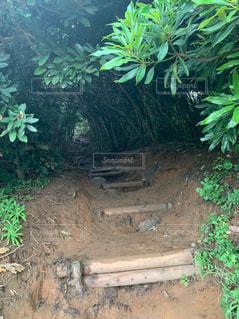トトロの森入り口の写真・画像素材[2537566]