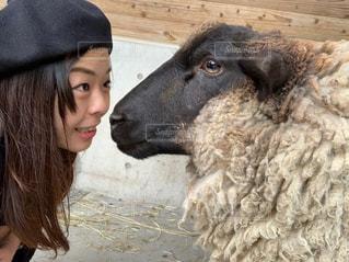 私と羊の写真・画像素材[2551036]