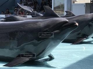 イルカの写真・画像素材[2577257]