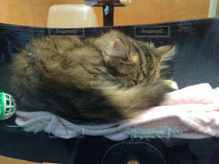 ベッドの上で眠っている猫.2の写真・画像素材[1002611]