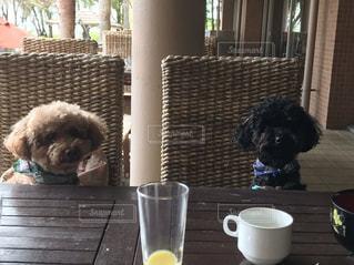 コーヒーを飲みながら隣に座っている犬の写真・画像素材[2527399]