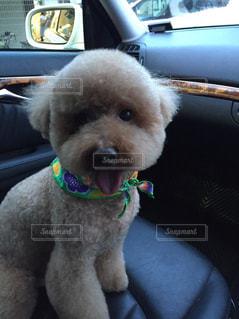 車の座席に座っている犬の写真・画像素材[2540055]