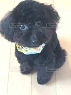 赤ちゃん犬の写真・画像素材[2540247]