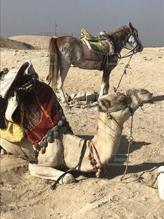 砂漠の写真・画像素材[2626580]