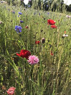 素朴だけど可愛いお花たちの写真・画像素材[2606797]