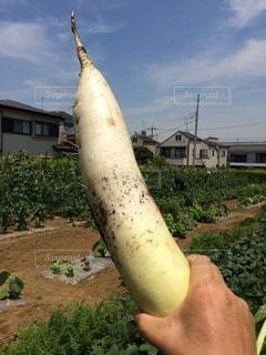 野菜 - No.97273